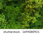 The Incredible Vegetation Of...