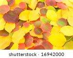 autumn leafs background | Shutterstock . vector #16942000