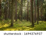 A Beautiful Natural Forest In...
