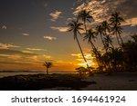 Coconut Palm Trees On The Beach ...