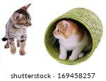 Stock photo little kittens isolated on white 169458257