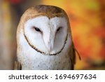 Barn Owl Upstate New York...
