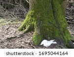 A Photo Of Large Tree Roots...