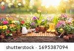 garden flowers  plants and... | Shutterstock . vector #1695387094