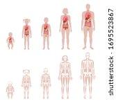 human skeleton and internal... | Shutterstock .eps vector #1695523867