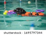 A Dog Swims In A Pool With A...