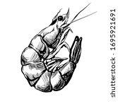 sketch  shrimp vector to be... | Shutterstock .eps vector #1695921691