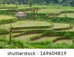 rice paddies | Shutterstock . vector #169604819