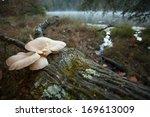 A Mushroom On A Log At The Edg...
