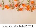 Beautiful Floral Frame. Orange...