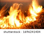 Burn Rice Stubble With Flames...