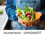 Fresh Organic Vegetables ...