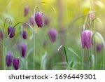 Soft And Selective Focus Of...