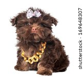 russian color lap dog puppy   Shutterstock . vector #169648307