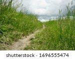 Hiking Trail In Prairie Grass
