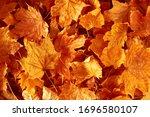Autumn Creative Composition....