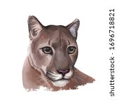 Cougar Large Felid Native To...