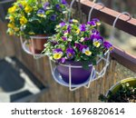 Flowerpot With Spring Flowers...