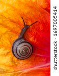 Snail Walking In The Colorful...