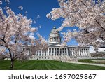 Cherry Blossom In Full Bloom At ...