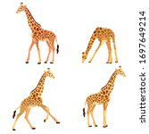Vector Illustration Of Giraffe...