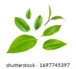 Swt fresh green tea leaf...