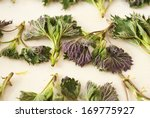 nettle leaves | Shutterstock . vector #169775927