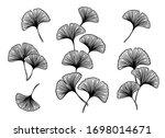 ginkgo or gingko biloba leaves... | Shutterstock .eps vector #1698014671