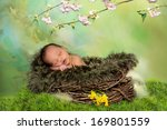 Sleeping African Baby In A...