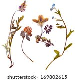 set of wild alpine flowers... | Shutterstock . vector #169802615
