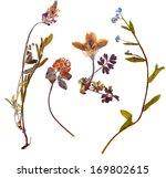 Stock photo set of wild alpine flowers pressed isolated 169802615