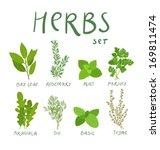 set of 8 vector herbs | Shutterstock .eps vector #169811474