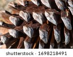 Pine Cone Close Up  Nature...