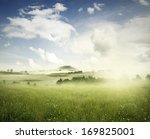 Meadow In Landscape  New Zealand