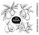 vector sketch avocado... | Shutterstock .eps vector #1698386821