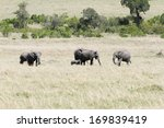Постер, плакат: Elephants in the grassland