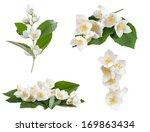 Stock photo set of jasmine flowers isolated on white background 169863434