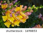 blossoming flowers of a yellow... | Shutterstock . vector #1698853