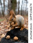 Cute Squirrel Eats Nuts In The...