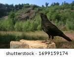 A Rock Raven On A Rock
