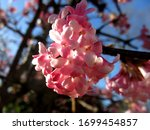Illuminated  A Cluster Of...