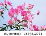 Beautiful Light Soft Pink...