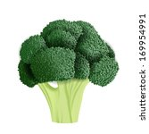 realistic broccoli vector... | Shutterstock .eps vector #169954991