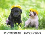 Small photo of Little kitten and puppy crowned chaplet from the dandelion flowers. The kitten and puppy sitten on the grass