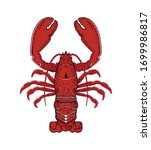 red lobster. isolated lobster... | Shutterstock .eps vector #1699986817