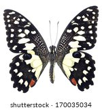 Stock photo butterfly isolated on white background 170035034
