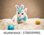 White Kitty Dressed Up As...