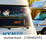 Valencia, Spain - November 23, 2019: Cat laying on bed in Hymer integra rv camper car and looking around trought front window pane. Motorhome traveling with pet. - stock photo