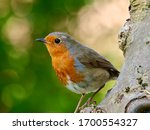 Cute Robin Standing On The Tre...