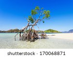 Lonely Mangrove Tree On The...